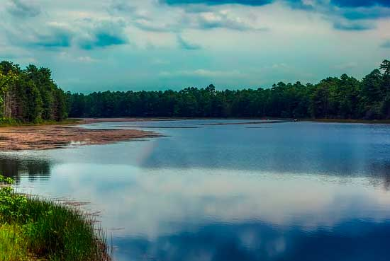 Доклад Обитатели озера