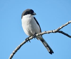Доклад на тему птиц 8588
