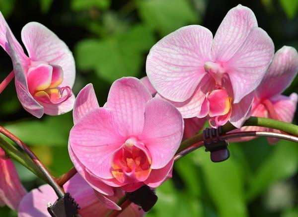 Доклад про цветок орхидеи 4905