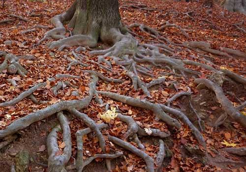 Доклад на тему видоизменение корней 9100