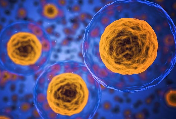Доклад на тему клетки живых организмов 7772