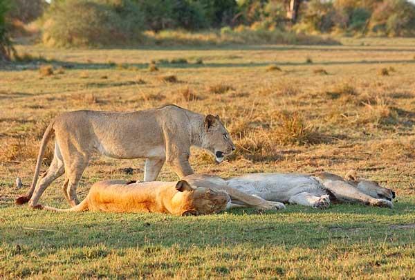 Животные в природе доклад 4742