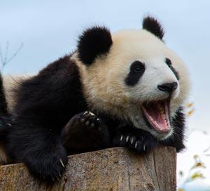 Как преобразовать текст в научный доклад о медведях 8800